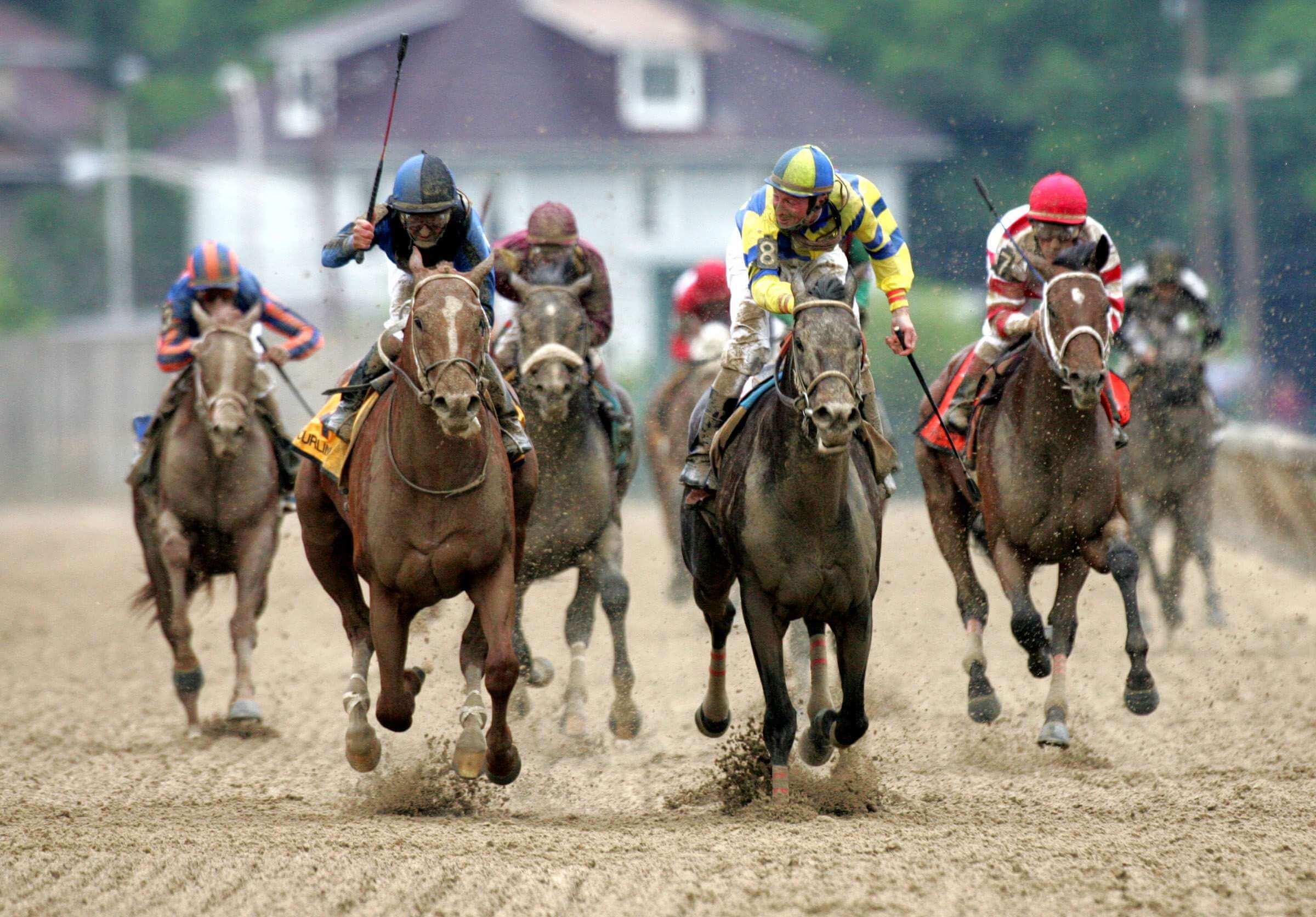Competicion caballos