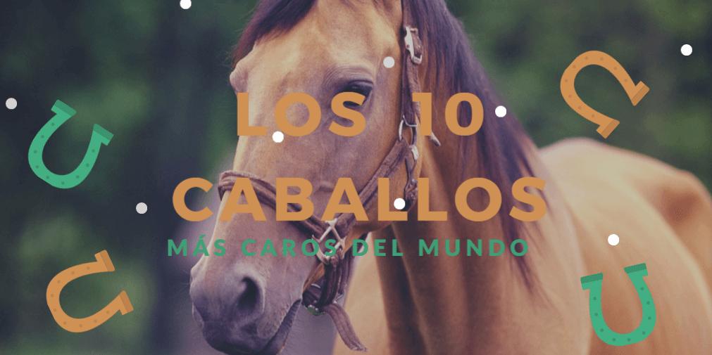 Los 10 caballos más caros del mundo - Apuestivas