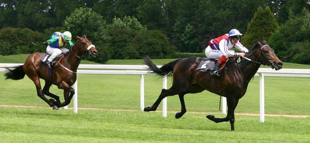blog-horse-front-runner